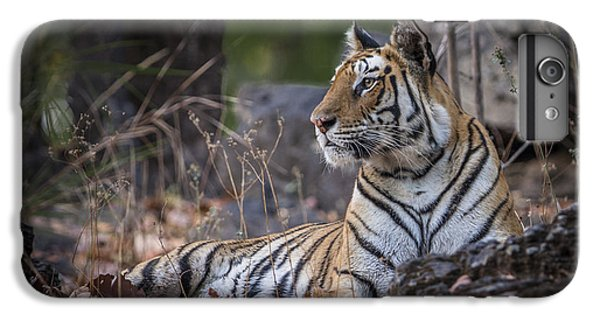 Bengal Tiger IPhone 6 Plus Case by Hitendra SINKAR