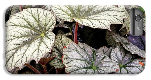 Big Begonia Leaves IPhone 6 Plus Case by Nareeta Martin