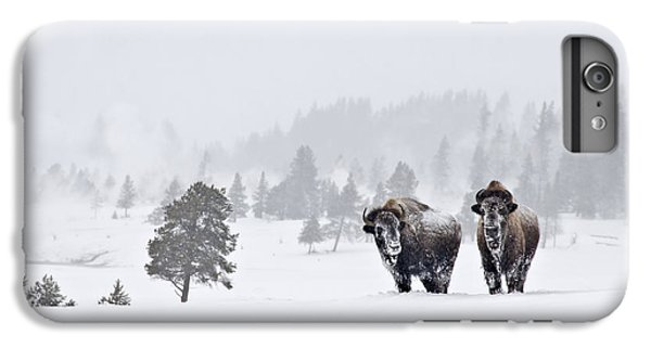 Bison In The Snow IPhone 6 Plus Case