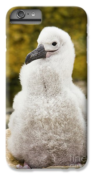 Albatross iPhone 6 Plus Case - Black Browed Albatross Chic by Yva Momatiuk John Eastcott