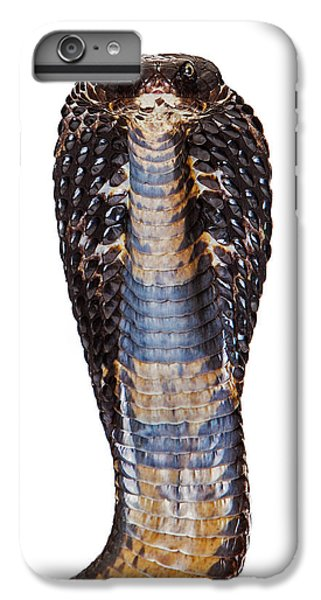 Black Pakistani Cobra Looking Into Camera IPhone 6 Plus Case by Susan Schmitz