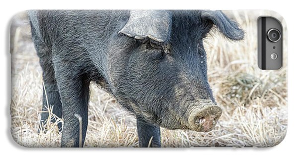 IPhone 6 Plus Case featuring the photograph Black Pig Close-up by James BO Insogna