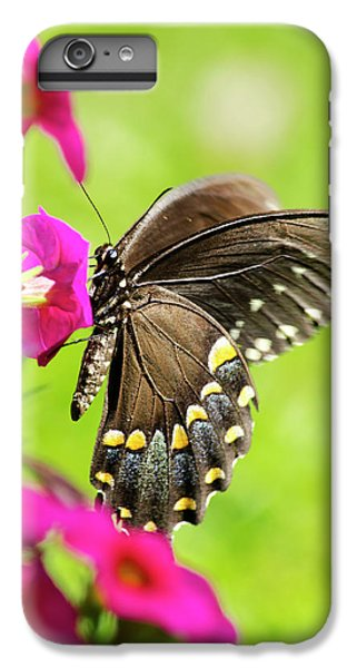 IPhone 6 Plus Case featuring the photograph Black Swallowtail Butterfly by Christina Rollo