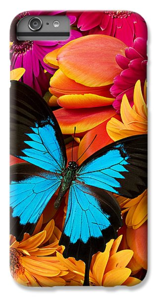 Blue Butterfly On Brightly Colored Flowers IPhone 6 Plus Case by Garry Gay