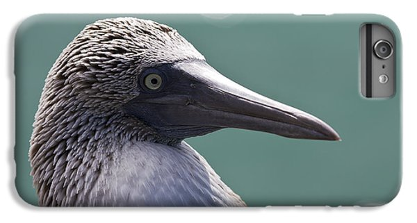 Blue Footed Booby II IPhone 6 Plus Case by Dave Fleetham
