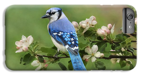 Bluejay iPhone 6 Plus Case - Blue Jay And Blossoms by Lori Deiter