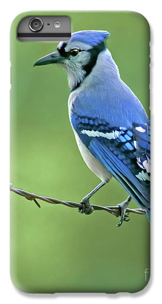 Bluejay iPhone 6 Plus Case - Blue Jay On The Fence by Robert Frederick