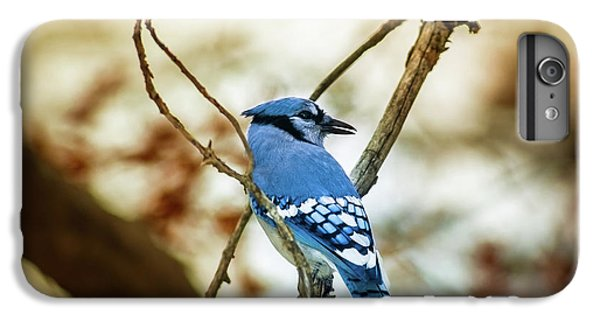 Bluejay iPhone 6 Plus Case - Blue Jay by Robert Frederick