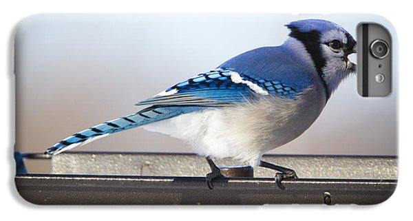 Blue Jay With A Mouth Full IPhone 6 Plus Case by Ricky L Jones