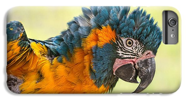 Blue Throated Macaw IPhone 6 Plus Case