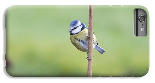 Titmouse iPhone 6 Plus Case - Blue Tit On A Garden Cane by Tim Gainey