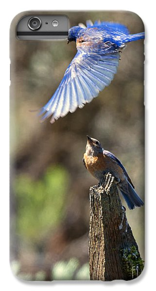 Bluebird Buzz IPhone 6 Plus Case by Mike Dawson