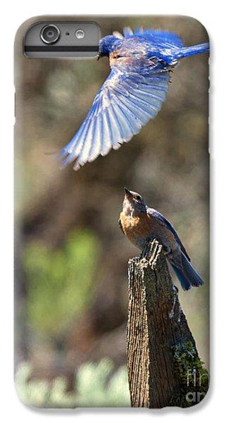 Bluebird Buzz IPhone 6 Plus Case
