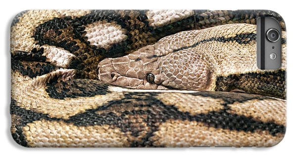 Garden Snake iPhone 6 Plus Case - Boa Constrictor by Tom Mc Nemar