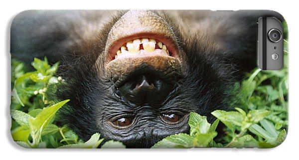 Bonobo Pan Paniscus Smiling IPhone 6 Plus Case