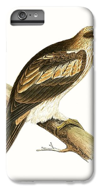 Booted Eagle IPhone 6 Plus Case by English School