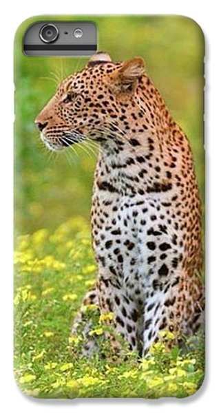 Botswana Leopard  IPhone 6 Plus Case