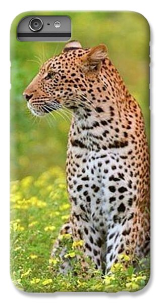 Botswana Leopard  IPhone 6 Plus Case by Happy Home Artistry