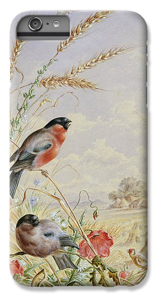 Bullfinches In A Harvest Field IPhone 6 Plus Case