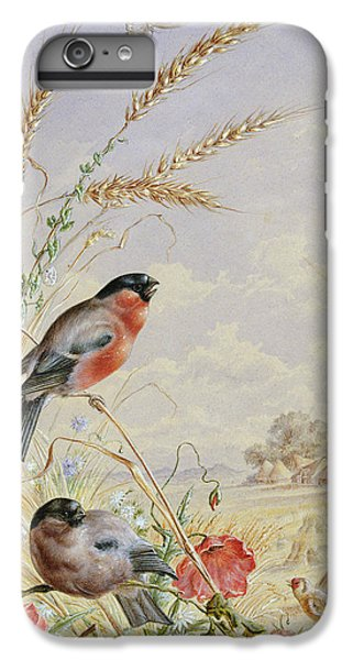 Bullfinches In A Harvest Field IPhone 6 Plus Case by Harry Bright