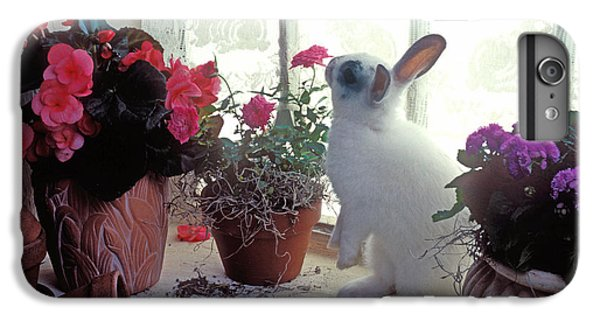 Bunny In Window IPhone 6 Plus Case