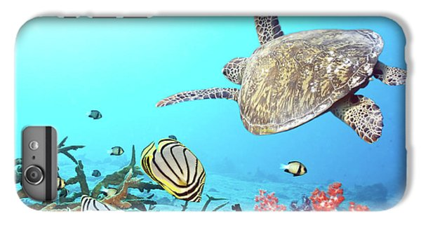 Butterflyfishes And Turtle IPhone 6 Plus Case by MotHaiBaPhoto Prints