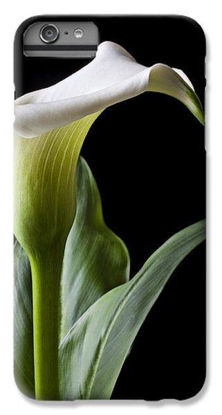 Calla Lily With Drip IPhone 6 Plus Case by Garry Gay