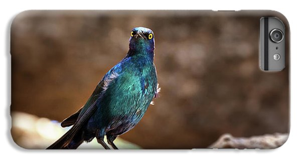 Starlings iPhone 6 Plus Case - Cape Glossy Starling by Jane Rix