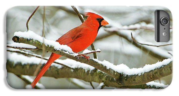 Finch iPhone 6 Plus Case - Cardinal In Snow by Laura D Young