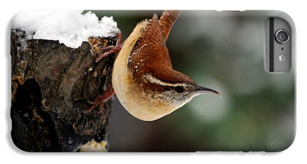 Carolina At The Suet Post IPhone 6 Plus Case by Skip Willits