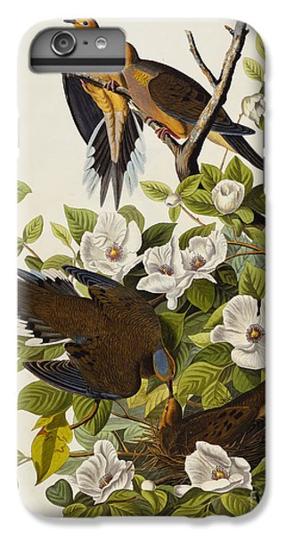 Carolina Turtledove IPhone 6 Plus Case by John James Audubon