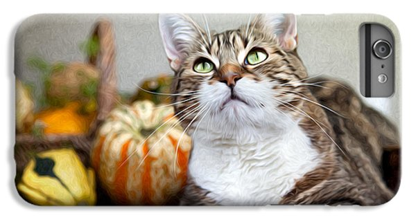 Cat And Pumpkins IPhone 6 Plus Case by Nailia Schwarz