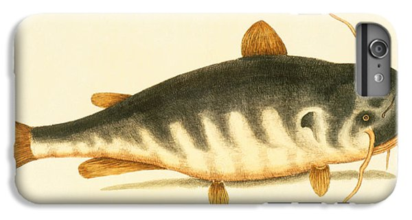 Catfish iPhone 6 Plus Case - Catfish by Mark Catesby
