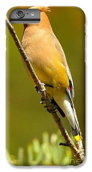 Cedar Waxwing IPhone 6 Plus Case by Adam Jewell