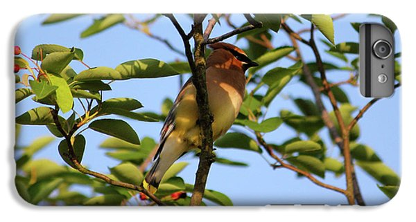 Cedar Waxwing IPhone 6 Plus Case by Mark A Brown