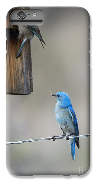 Checking The Nest IPhone 6 Plus Case by Mike Dawson