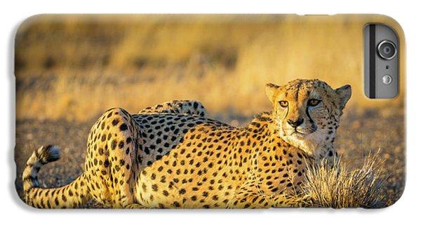 Cheetah Portrait IPhone 6 Plus Case by Inge Johnsson