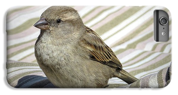 Crossbill iPhone 6 Plus Case - Chilling In Mallorca by Elisabeth Lucas