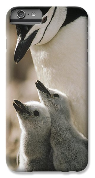 Chinstrap Penguin Pygoscelis Antarctica IPhone 6 Plus Case by Tui De Roy