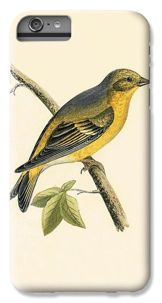 Citril Finch IPhone 6 Plus Case by English School