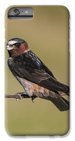 IPhone 6 Plus Case featuring the photograph Cliff Swallow by Gary Lengyel