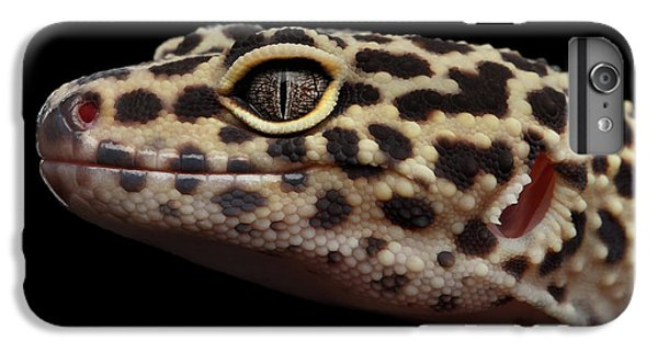 Close-up Leopard Gecko Eublepharis Macularius Isolated On Black Background IPhone 6 Plus Case by Sergey Taran