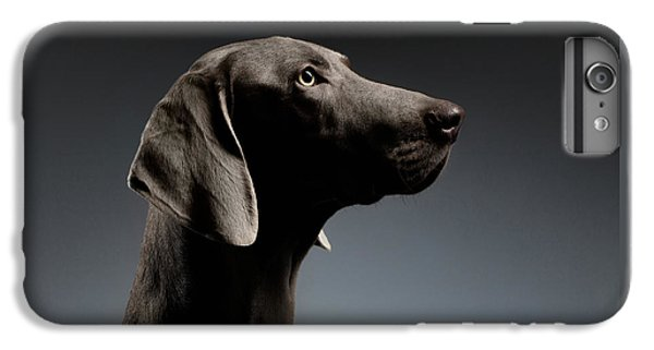 Dog iPhone 6 Plus Case - Close-up Portrait Weimaraner Dog In Profile View On White Gradient by Sergey Taran