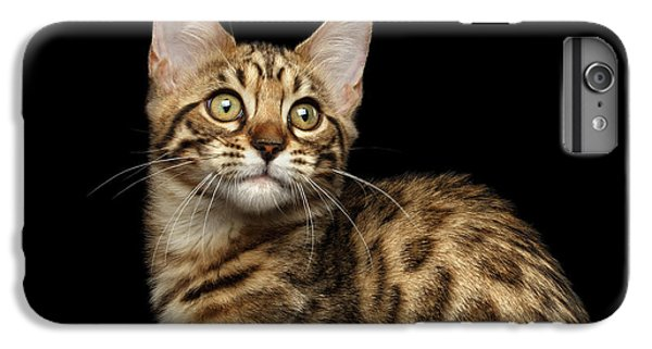 Closeup Bengal Kitty On Isolated Black Background IPhone 6 Plus Case by Sergey Taran