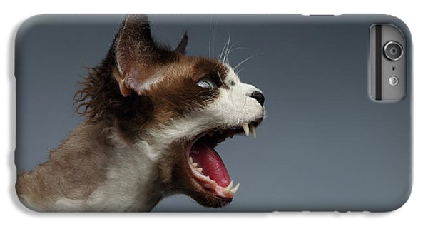 Cat iPhone 6 Plus Case - Closeup Devon Rex Hisses In Profile View On Gray  by Sergey Taran