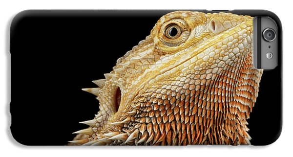 Closeup Head Of Bearded Dragon Llizard, Agama, Isolated Black Background IPhone 6 Plus Case by Sergey Taran