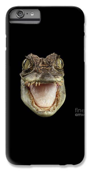 Closeup Head Of Young Cayman Crocodile , Reptile With Opened Mouth Isolated On Black Background, Fro IPhone 6 Plus Case by Sergey Taran