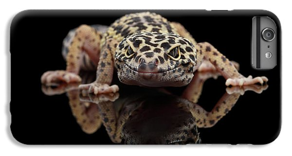 Closeup Leopard Gecko Eublepharis Macularius Isolated On Black Background, Front View IPhone 6 Plus Case by Sergey Taran