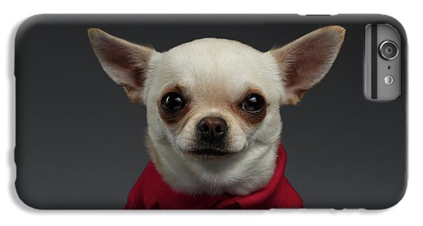 Dog iPhone 6 Plus Case - Closeup Portrait Chihuahua Dog In Stylish Clothes. Gray Background by Sergey Taran
