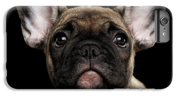 Dog iPhone 6 Plus Case - Closeup Portrait French Bulldog Puppy, Cute Looking In Camera by Sergey Taran